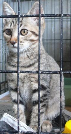 県央動物保護管理センター-2009/10/19