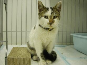 下越動物保護管理センター-2009.11.12-4