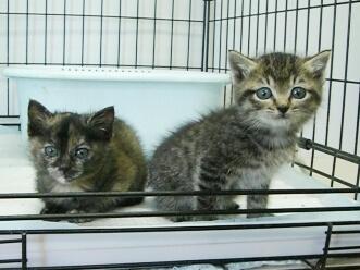 下越動物保護管理センター-2009/11/24