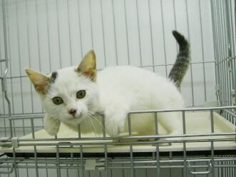 下越動物保護管理センター-2009/11/17