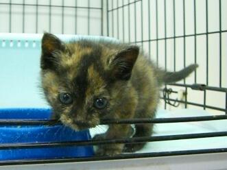 下越動物保護管理センター-2009.11.12-1