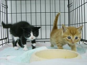 下越動物保護管理センター-2009.11.12-2