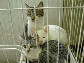 中越動物保護管理センター-2009/11/02-1