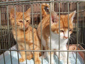 上越動物保護管理センター2009/11/27-1
