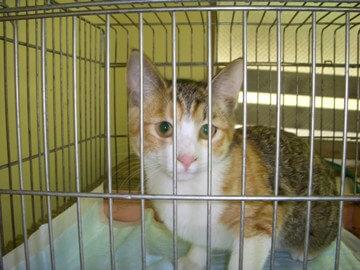 上越動物保護管理センター2009/11/27-2
