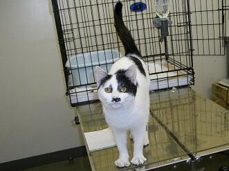 下越動物保護管理センター-2009/12/09