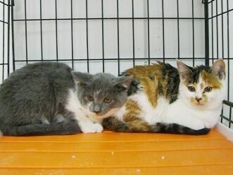 下越動物保護管理センター-2009/12/03-3