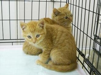 下越動物保護管理センター-2009/12/21-1